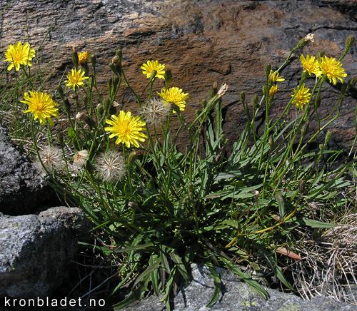 wildflowerxo